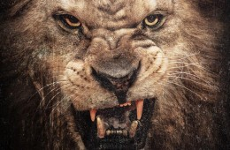 Animal Ambition Front